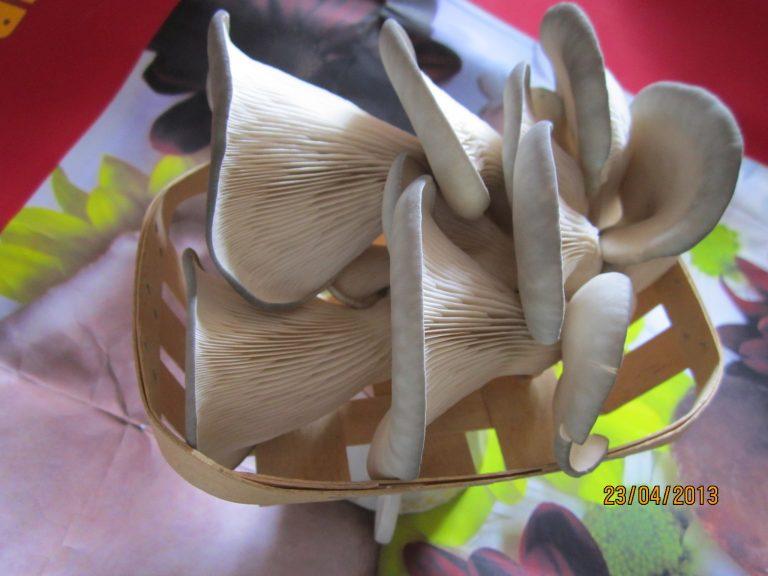 К вопросу о товарном виде грибов