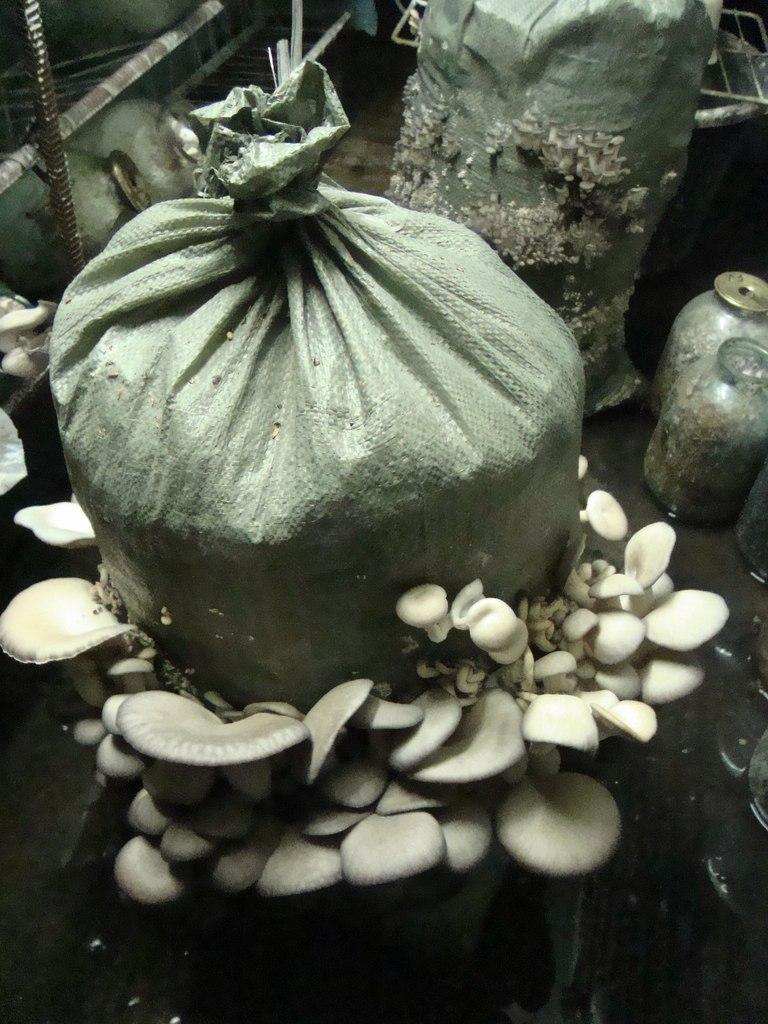 Получение дополнительной выгонки грибов